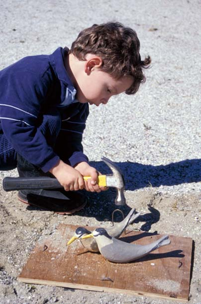 child installing tern decoys