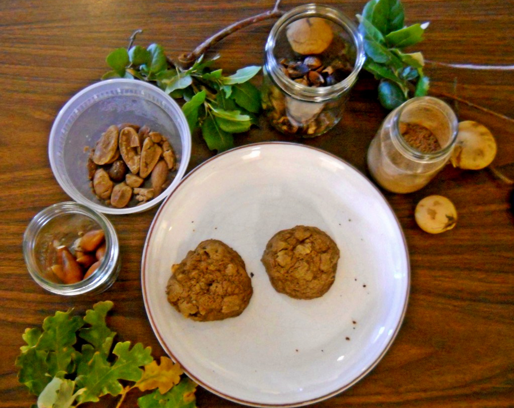 Clockwise starting from lower left: valley oak leaves; valley oak acorns; shelled, leached acorns; coast live oak leaves; coast live oak acorns; valley oak flour; oak apples (galls); cookies made with valley oak powdered acorns. Photo: Emily Moskal.
