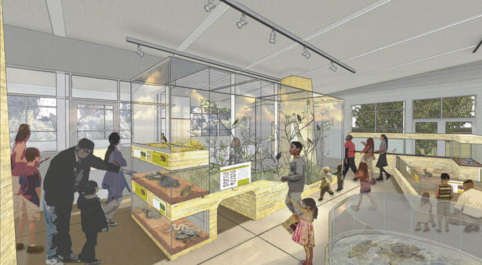 A proposed chaparral exhibit in the redesigned Randall.