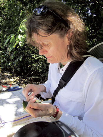 Elizabeth Hadly holds a bird during field research with students in Las Cruces Reserve, Costa Rica. (Photo courtesy of Elizabeth Hadly)