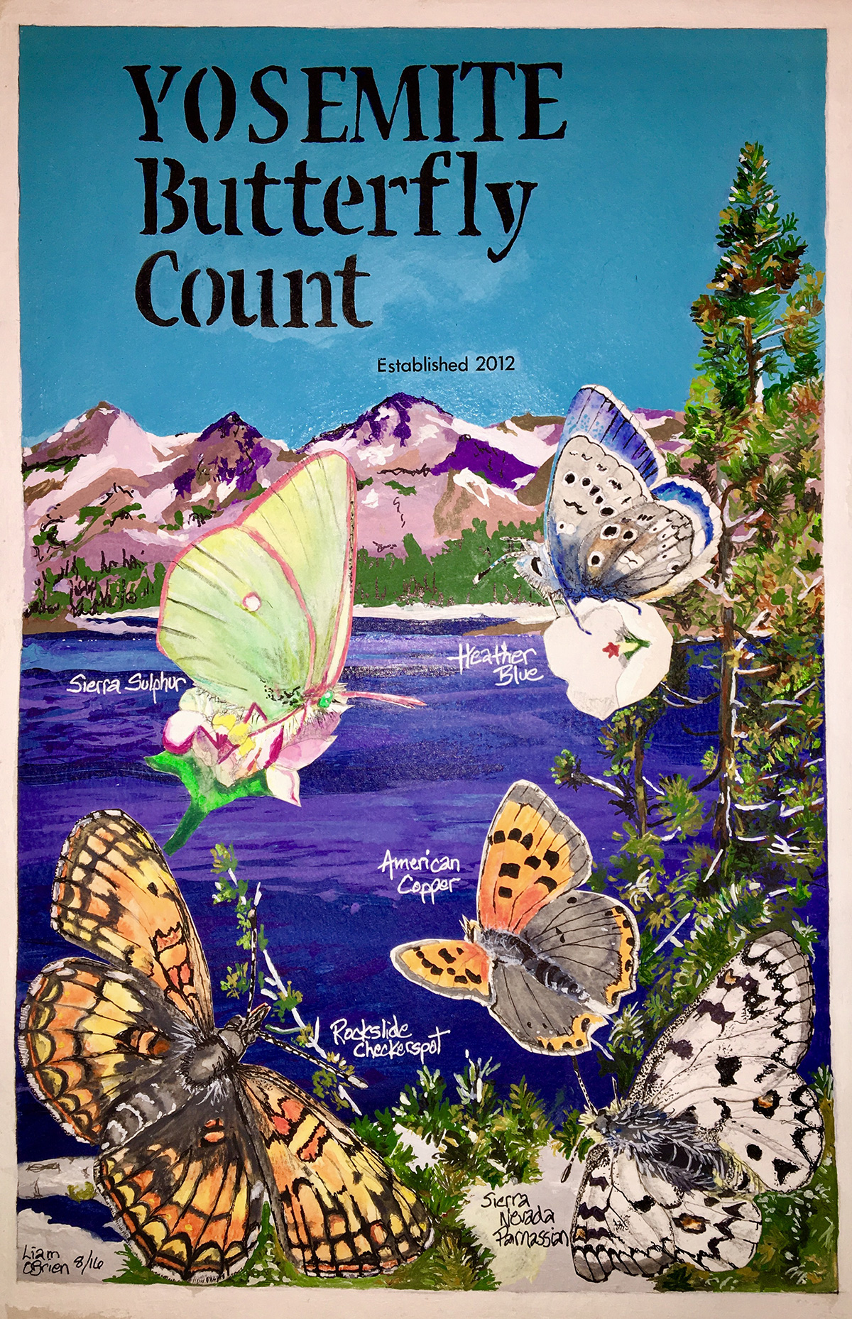 Yosemite butterfly count illustration