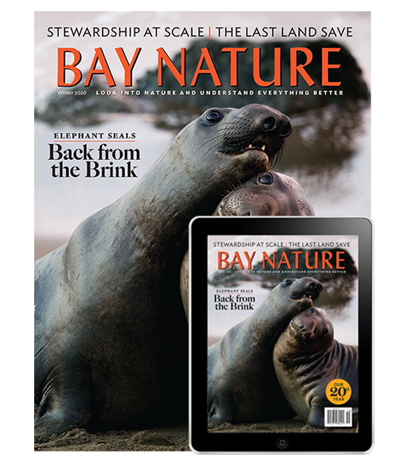 2020 Winter Issue with Two Elephant Seals, Print + Digital Edition