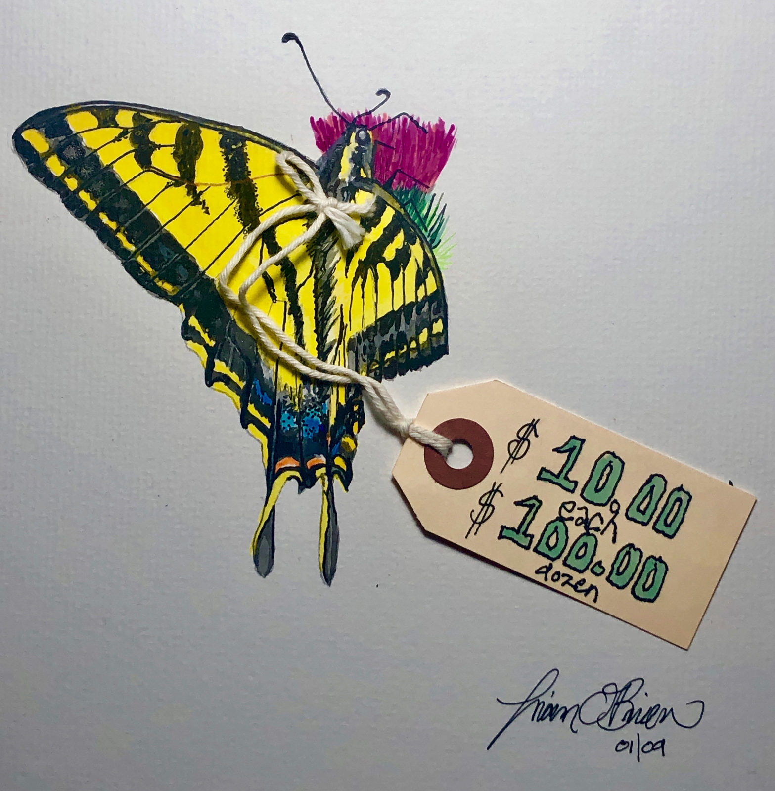 swallowtail with price tag