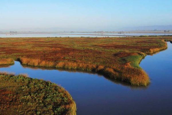 Napa–Sonoma Marshes Wildlife Area